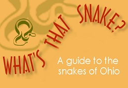 What's That Snake A guide to the snakes of Ohio
